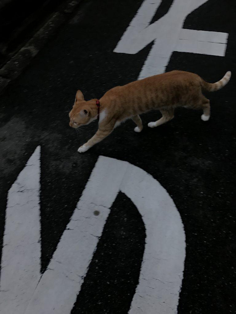 横断する猫