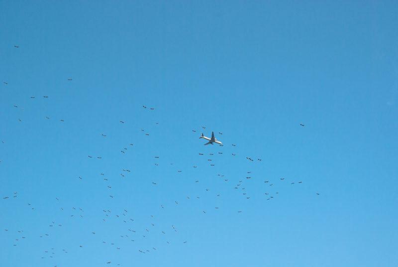 空を飛ぶ飛行機と鳥たち