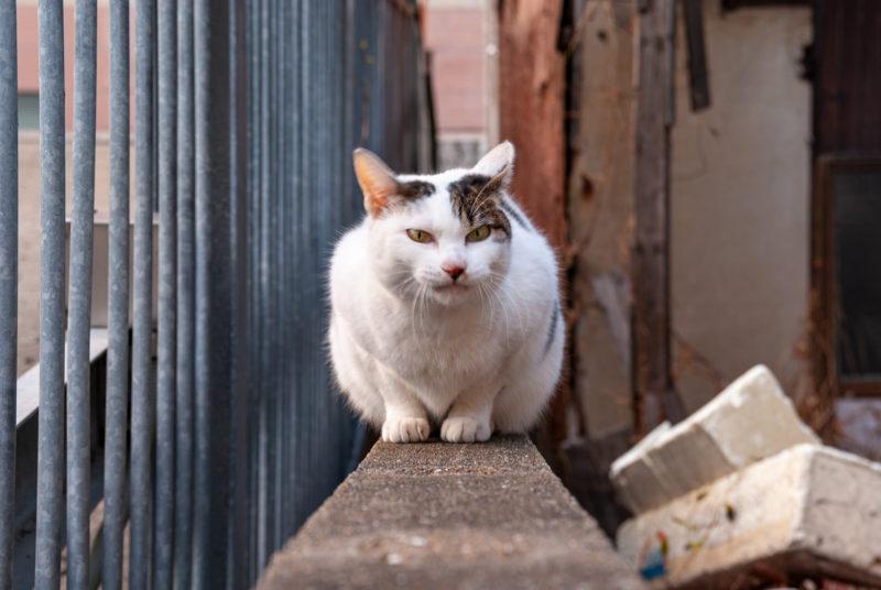 野良猫、地域猫の写真