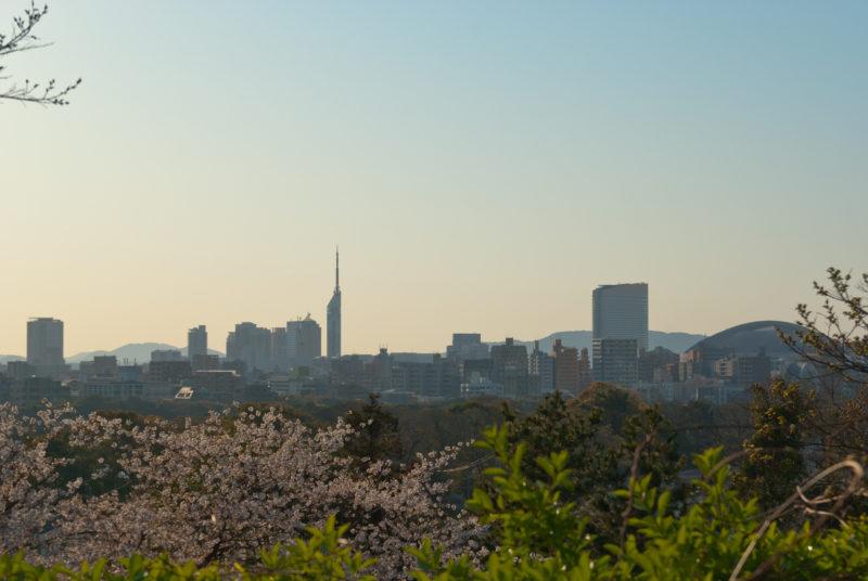 福岡タワーと桜とドーム