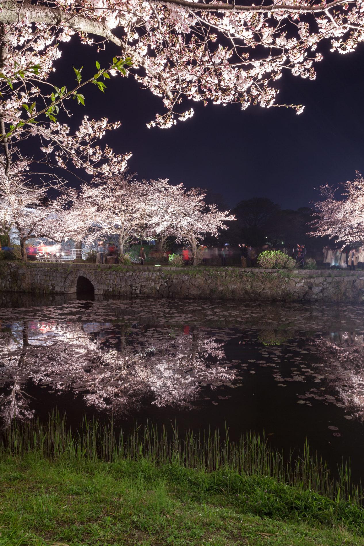 お堀(水辺)の夜桜