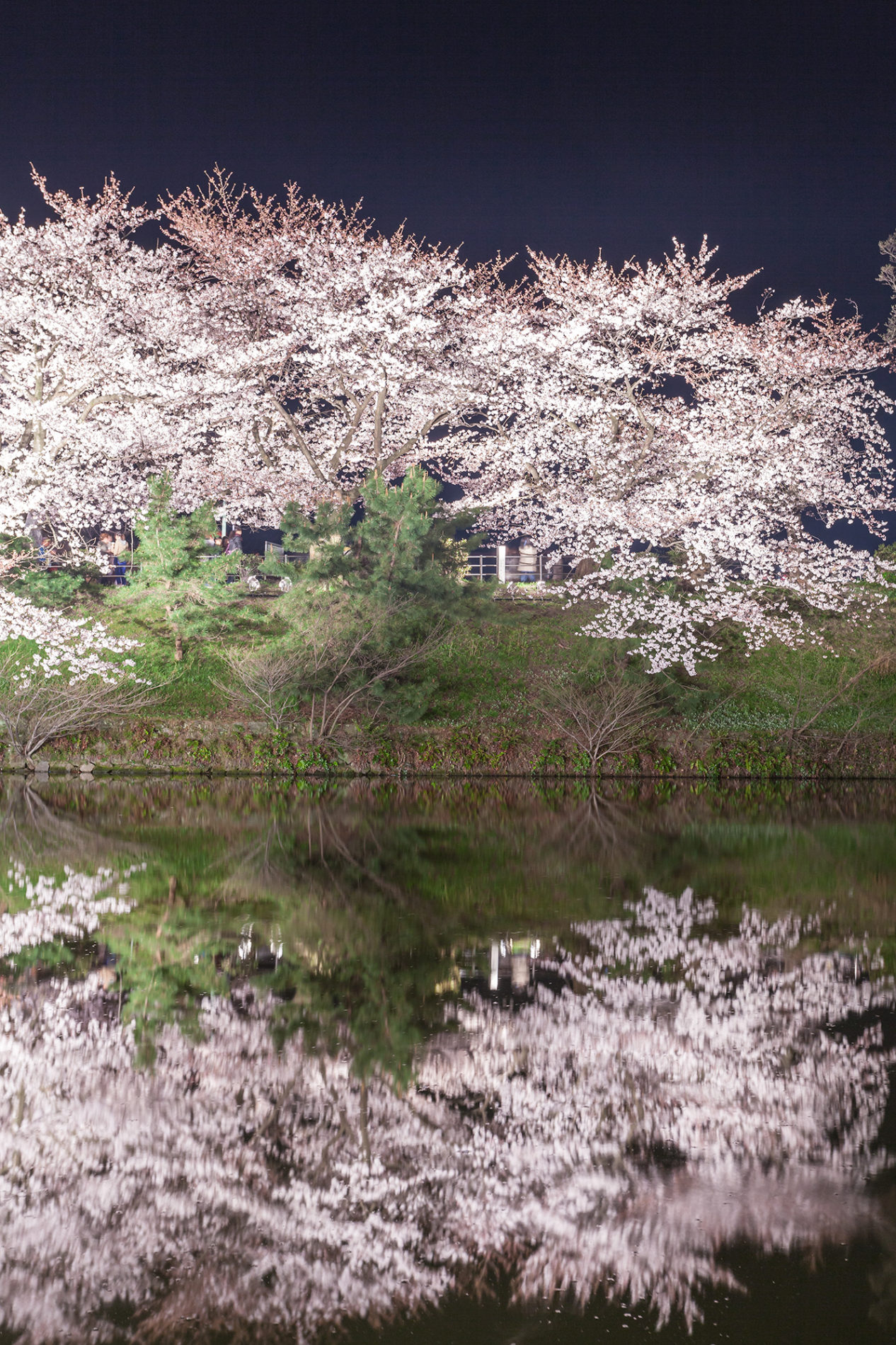 水辺の夜桜の写真