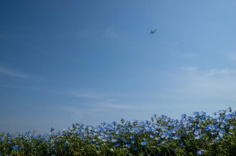 ネモフィラと飛行機写真素材