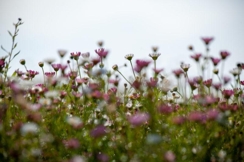 花の写真,素材,背景,ぼかし,フリー