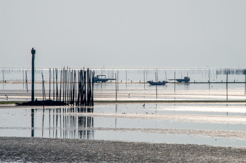 有明海の干潟の風景
