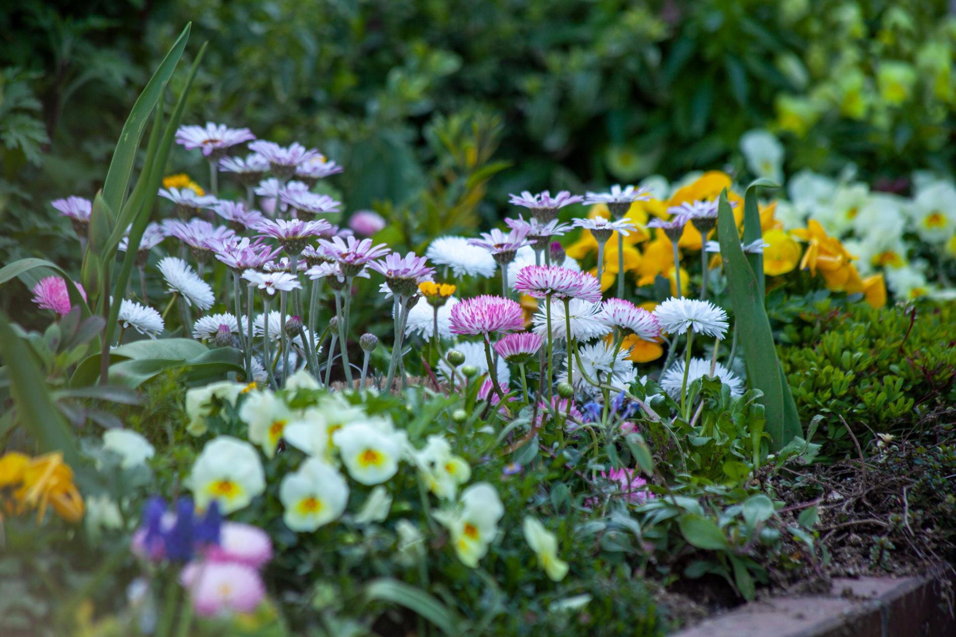 花壇の花のイメージ画像