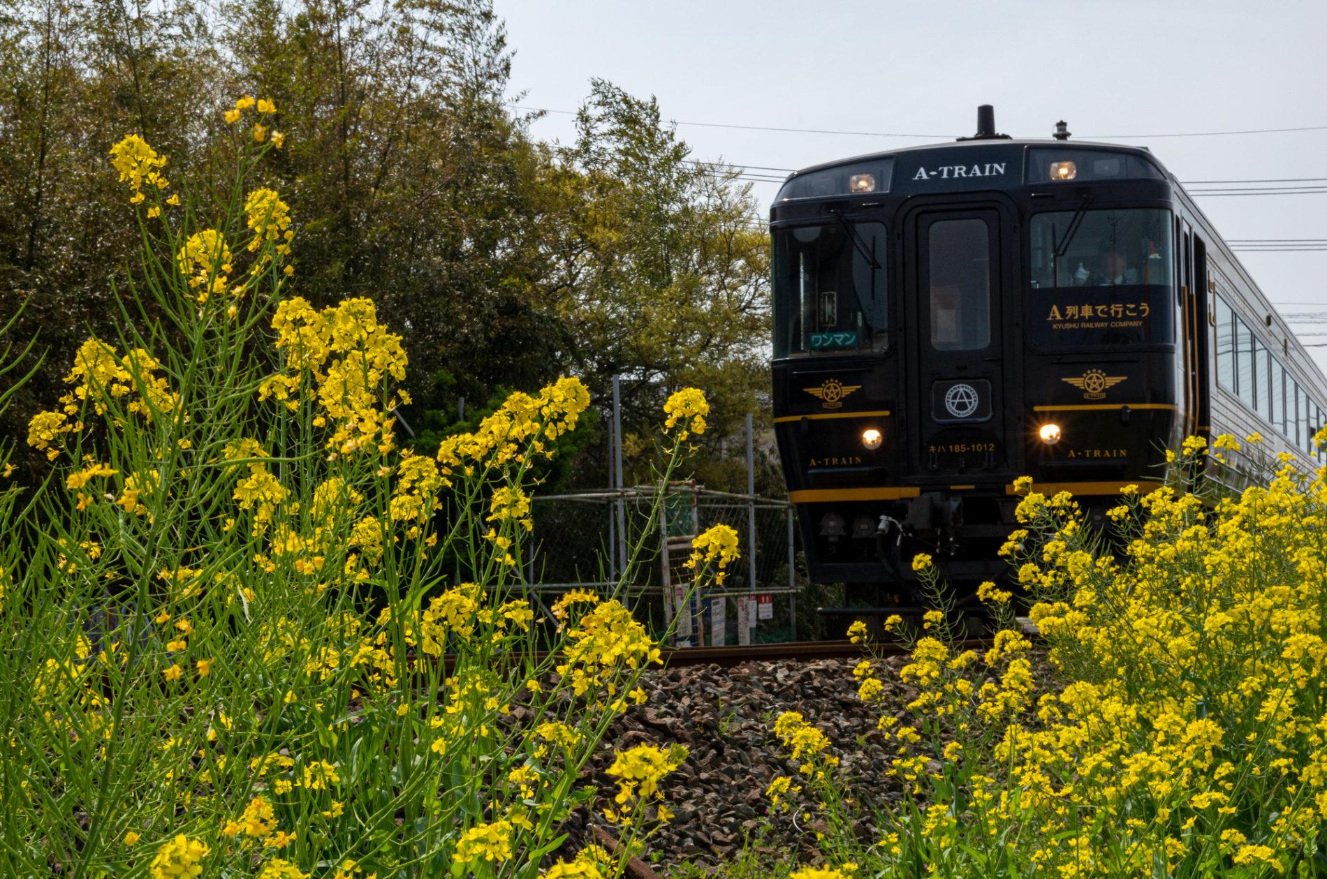 菜の花と特急A列車(A-TRAIN)