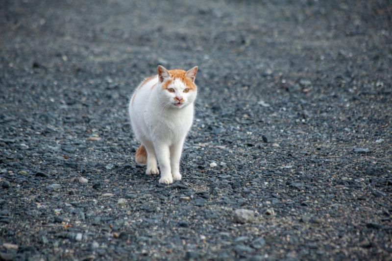 猫(ねこ,ぬこ,cat)の写真