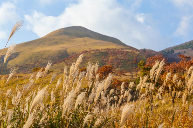 大分県由布の山とススキと紅葉 秋の風景